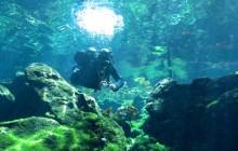 2 Dive In 2 Different Cenote