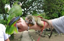 Zip Line Adventure plus Tropical Petting Zoo and Lunch