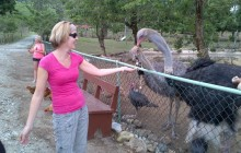 Amber Cove Zip Line Adventure plus Petting Zoo and Lunch