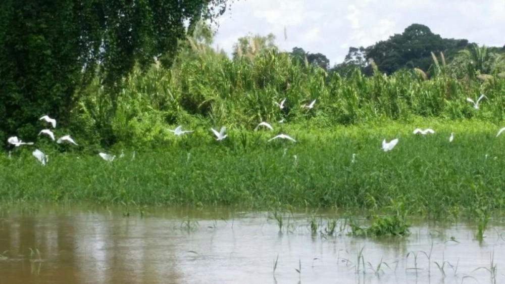Canoeing Or Kayaking Monkey River Belize