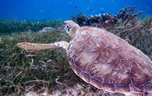 Hol Chan Marine Reserve