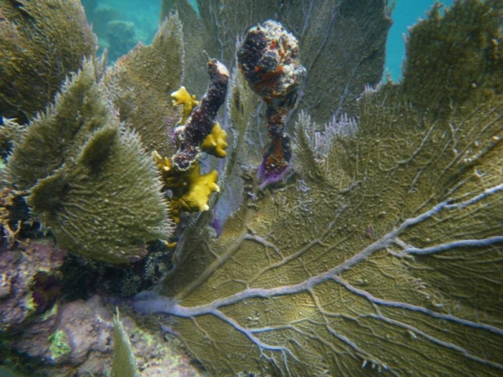 Discover Scuba Diving (2-Tank dive)