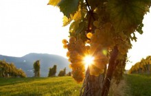 WINETime - Slovenske Konjice Wine and Traditional Food Private Tour
