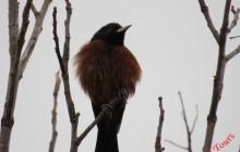 Birding Tours outside of Suchitoto - Lake, river, coffee