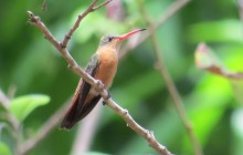 Birding Tours outside of Suchitoto - Lake, river, coffee