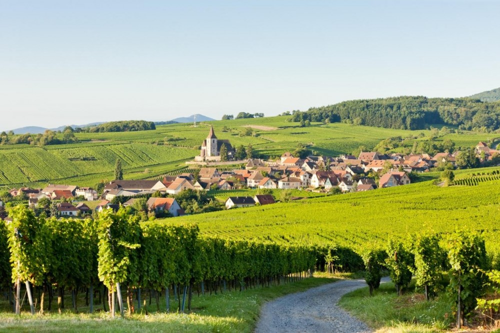 Alsace Wine Tour Half Day Shared from Colmar