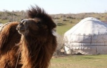 Camel riding Safaris in the Steppes of Central Asia
