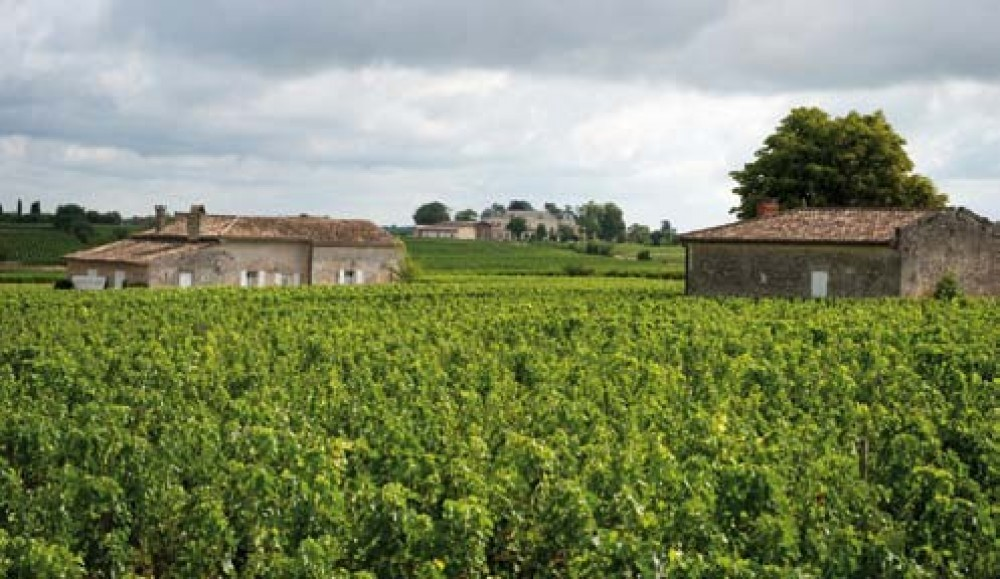 Private Wine Tour from Bordeaux Half Day