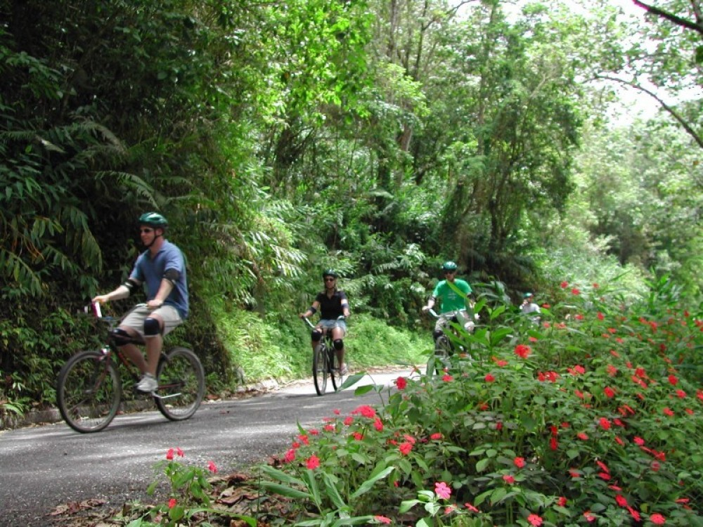 Blue Mountain Bicycle Tour from Ocho Rios