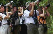 Panama Guided Birding Tours