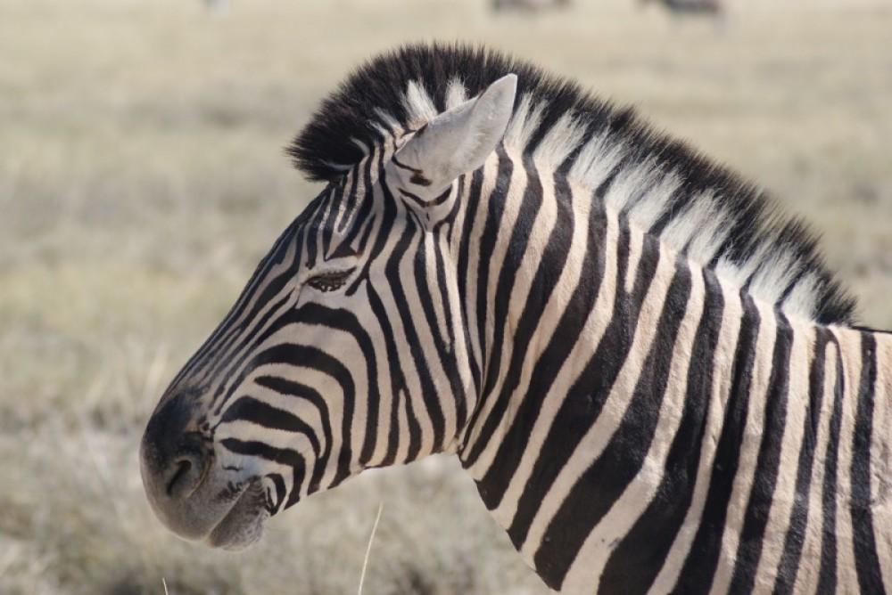 Namibia (9 Days)