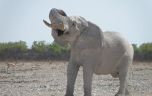 4 Days Waterberg and Etosha Safari