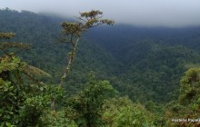 Mindo Cloud Forest