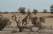 Kgalagadi Transfrontier Park 3 Days Tour