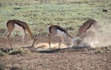 Polentswa Camping Wilderness Trail Botswana