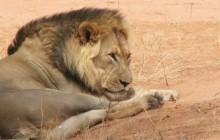 11 Days Camping Kgalagadi, Central Kalahari, Chobe, Victoria