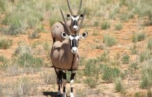 Kgalagadi Transfrontier Park, Augrabies Fall National Park 5 Days