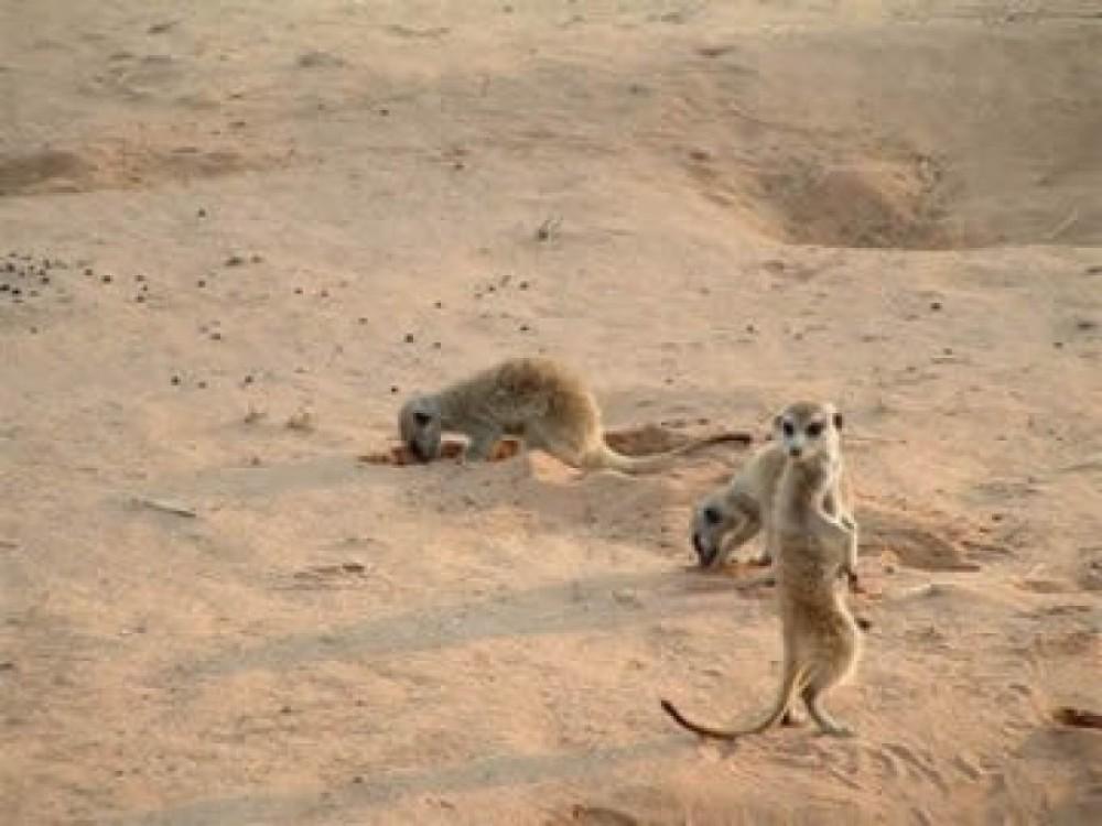 Kalahari Camping Tours 5 Days 4 Nights