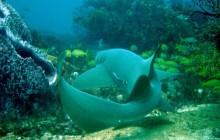 5 Dives