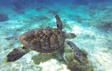 Punta Allen Biosphere & Snorkel Adventure