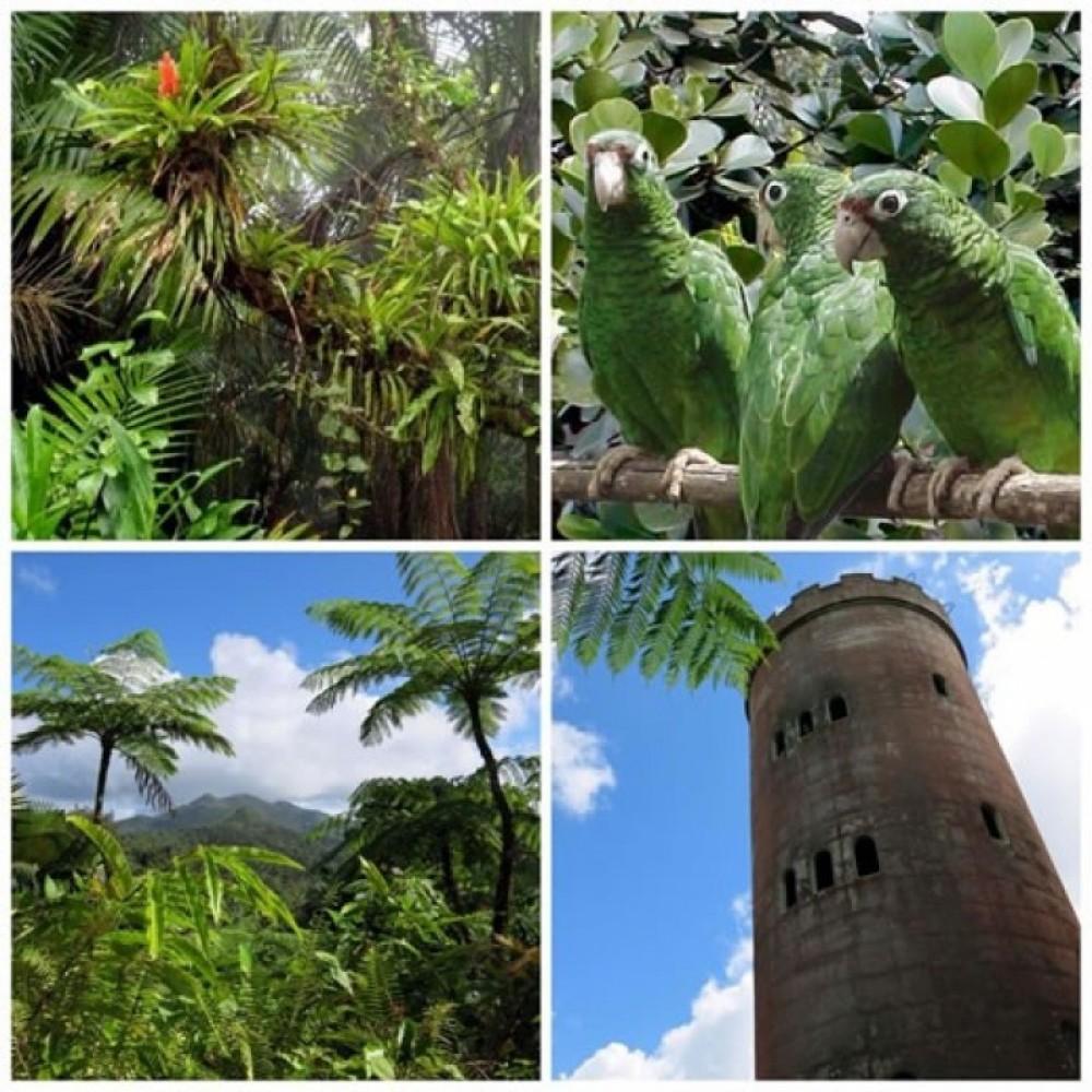 Rain Forest Zip Line Park