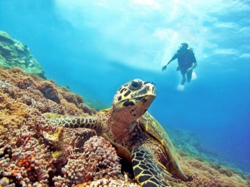 A picture of Fun Dive Packages 4 Days and 3 Nights