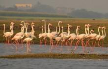 Pune Bird Safari - Private Day Excursion To Bhigwan