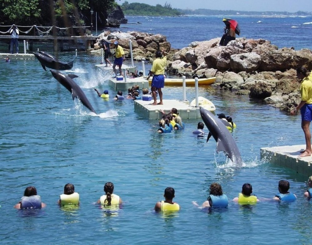 Dolphin Royal Swim: Ocho Rios