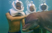 Dolphin Underwater Trek: Grand Cayman (West)