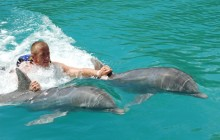 Dolphin Royal Swim: Tortola