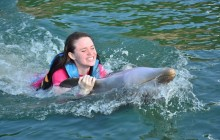 Dolphin Swim Adventure: St. Kitts