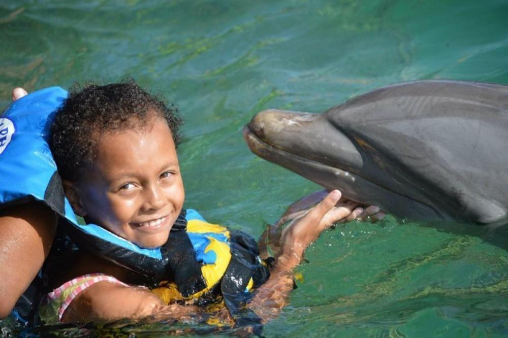 Dolphin Encounter: Anguilla - St. Martin