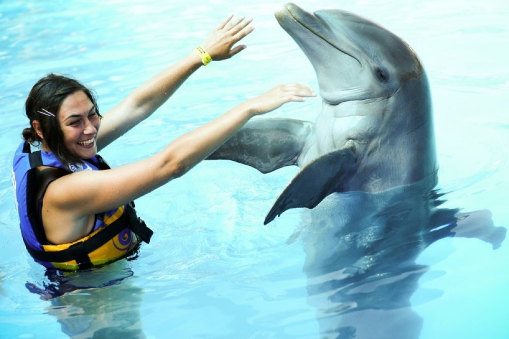 Dolphin Encounter: Puerto Vallarta