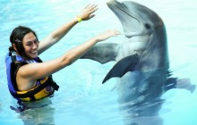 Dolphin Encounter: Puerto Vallarta