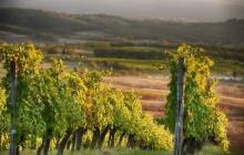 San Gimignano, Siena & Chianti Tour with Wine Tasting