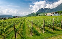 Wine Tour from Lake Garda (Half Day)
