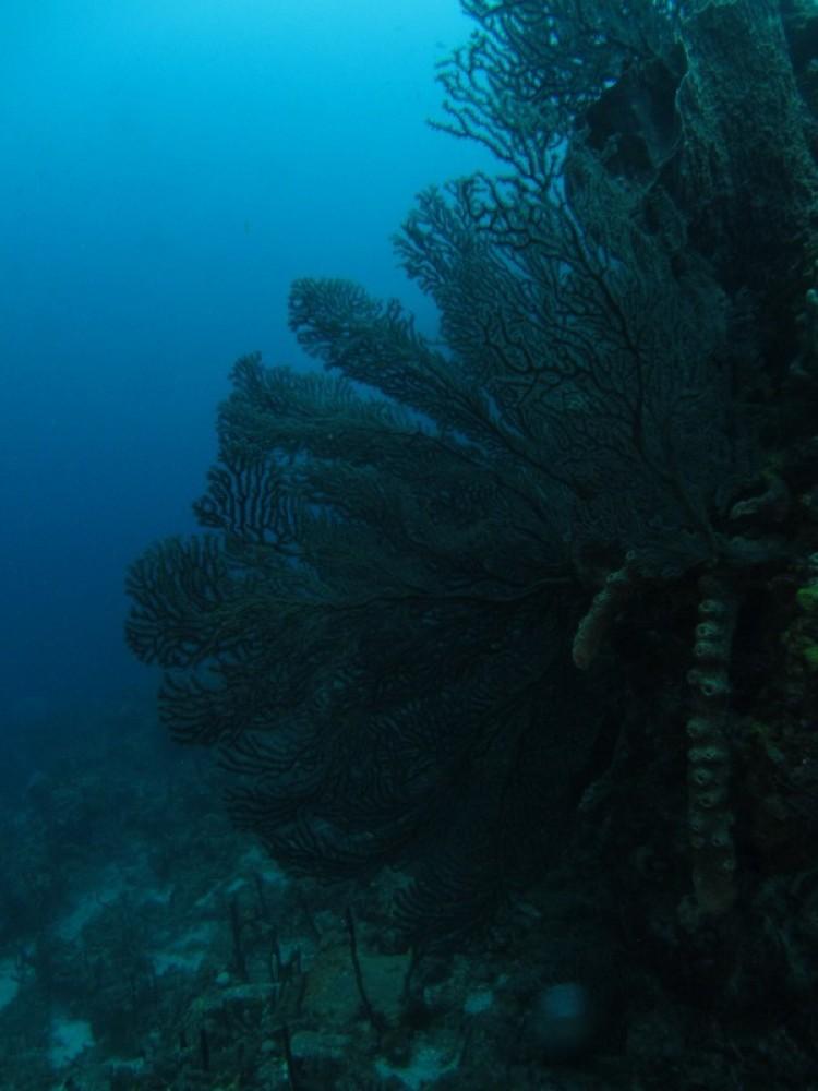 2 Tank Dive