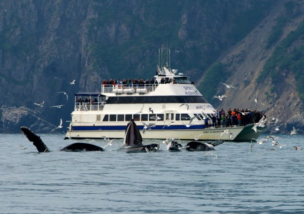 6 HR Kenai Fjords National Park Cruise Holgate Glacier Only