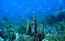 Private Charter - Full Day Scuba - French Side