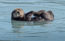 5 HR Kenai Fjords Resurrection Bay Wildlife Cruise