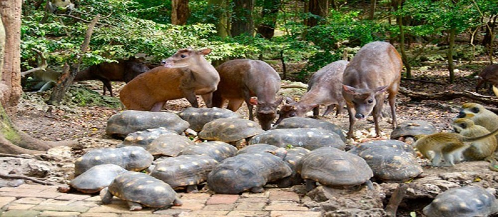 Abbey and Wildlife Tour