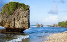 Cave, Abbey & Wildlife or Flower Forest Tour