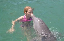 Dolphin Close Encounter