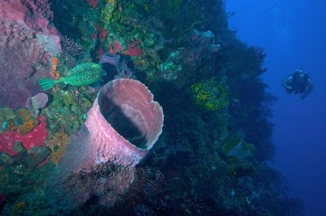 A picture of 3 Days/Two-Tank Morning Boat Dive Package