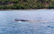 Dive Dominica