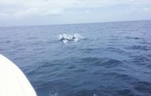 Soufriere Tour Land & Sea