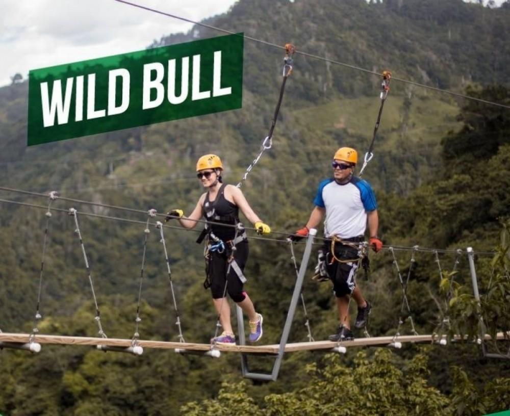 Wild Bull