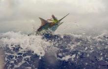 Hemingway Marlin Charter