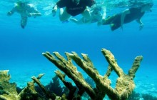 Combination Snorkel & South Island Tour