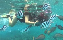 Snorkeling Tours - Glass Boat Tours